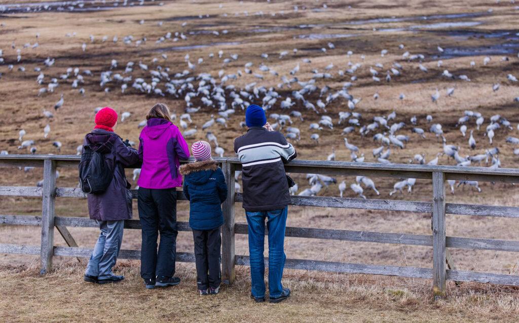 Besökare tittar på tranor. Foto.
