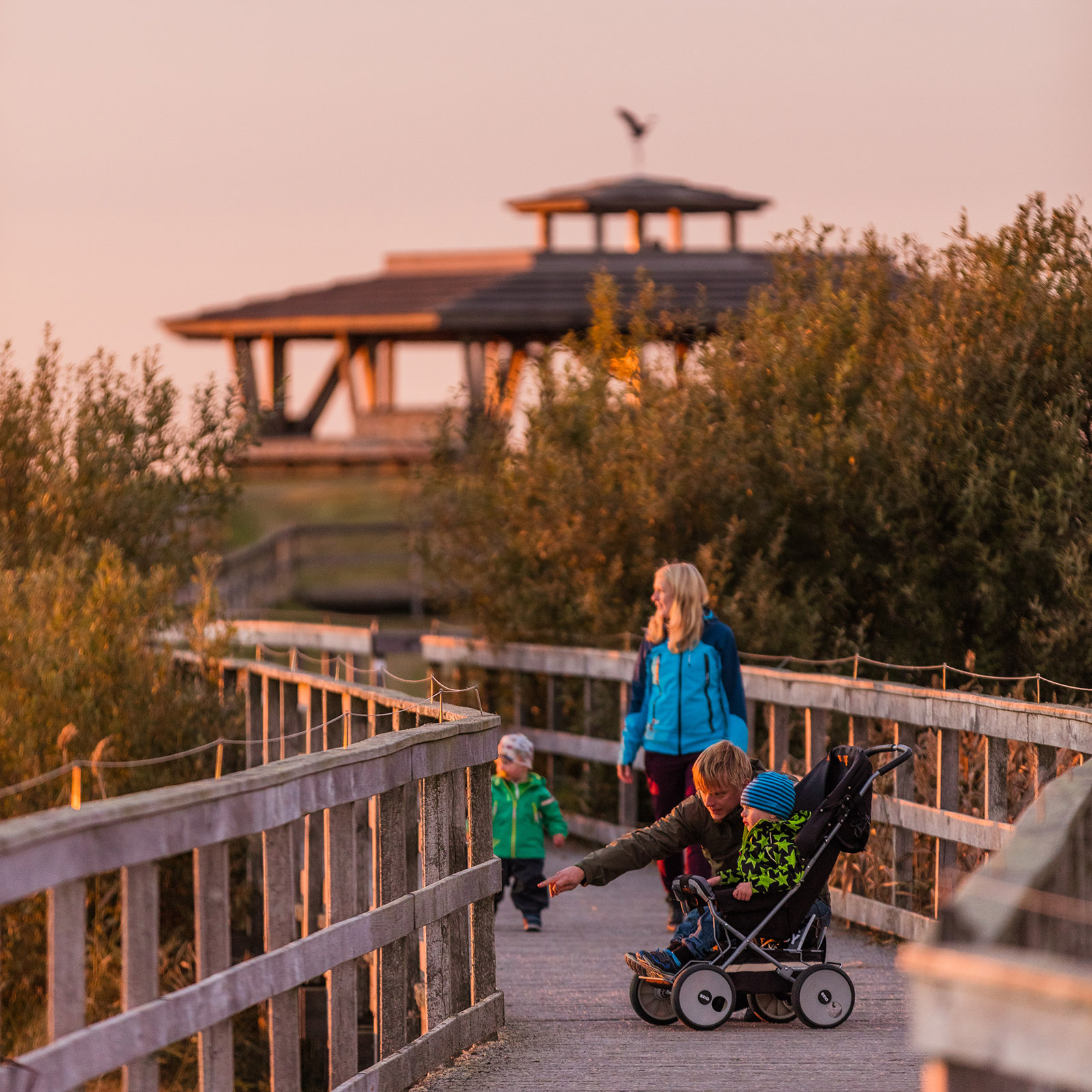 Barnvagnsguidningarna ger familjer en chans att komma ut i naturen. Foto.