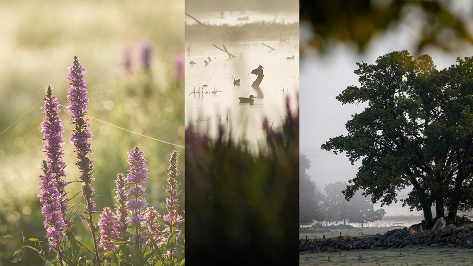 Följ med på en fotovandring där du får lära dig tips som gör dig till en bättre fotograf. Foto.