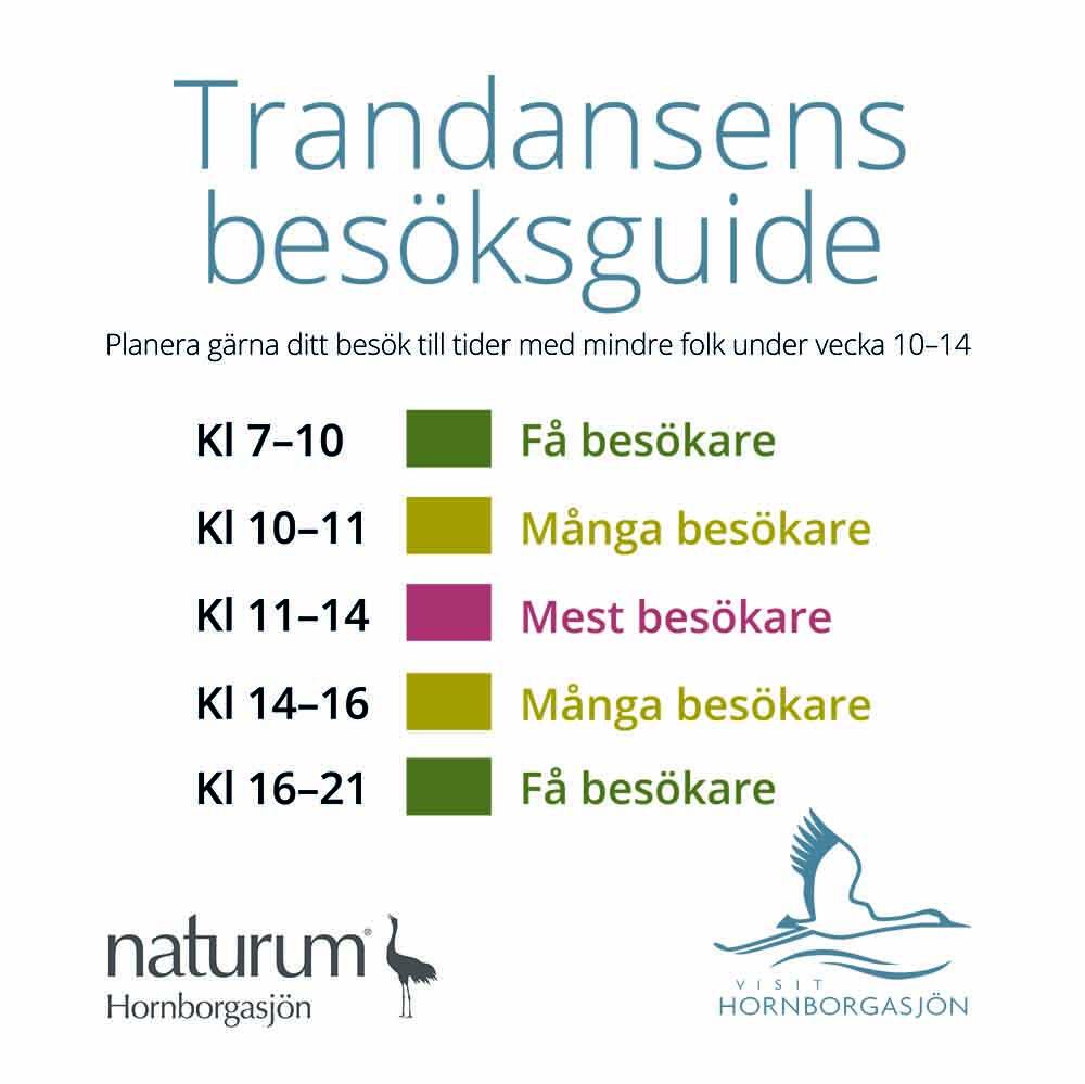 Besöksguide över när det är färre besökare vid Trandansen i Hornborgasjöns naturreservat. Tider på morgonen och på kvällen är det färre besökare.